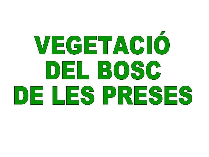VEGETACIÓ  DEL BOSC  DE LES PRESES