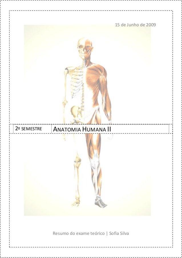 15 de Junho de 20092º SEMESTRE   ANATOMIA HUMANA II              Resumo do exame teórico | Sofia Silva