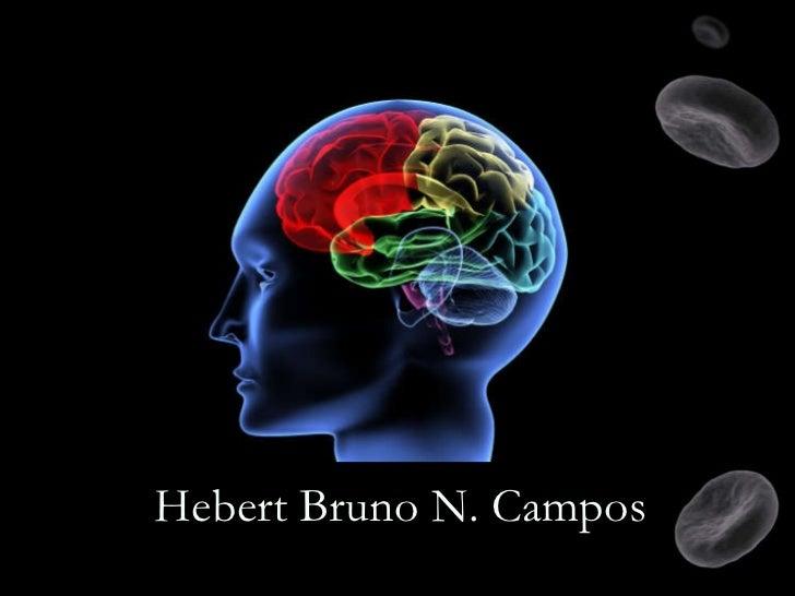 Hebert Bruno N. Campos