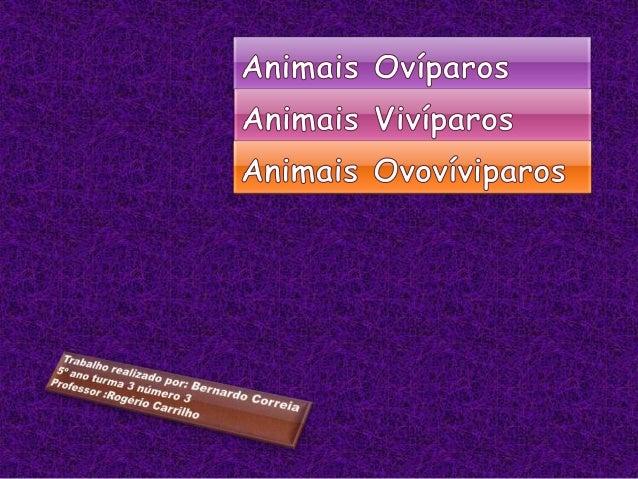 animais oviparos viviparo