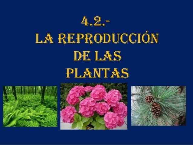 4.2.LA REPRODUCCIÓN DE LAS PLANTAS