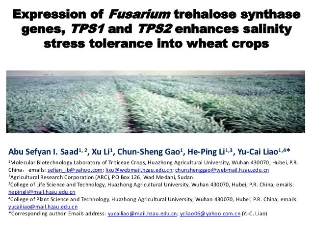 Expression of Fusarium trehalose synthase  genes, TPS1 and TPS2 enhances salinity     stress tolerance into wheat cropsAbu...