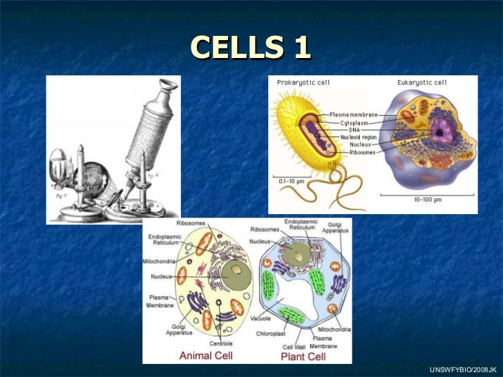 01 Cell Theory And Microcope