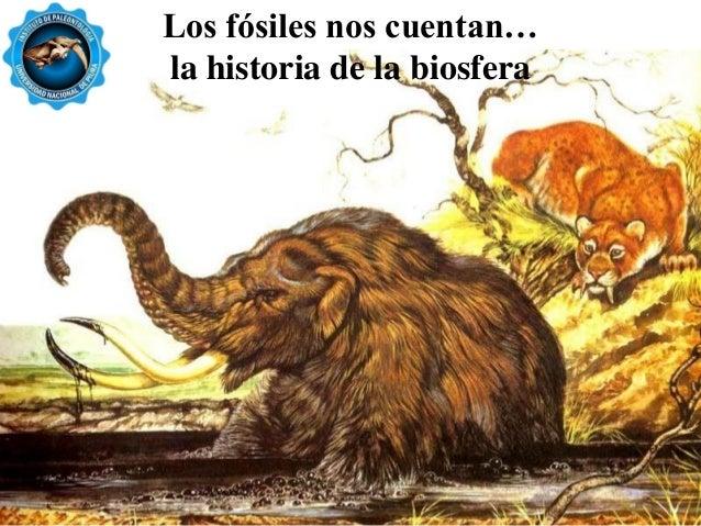 Resultado de imagen de Los fósiles nos cuentan historias