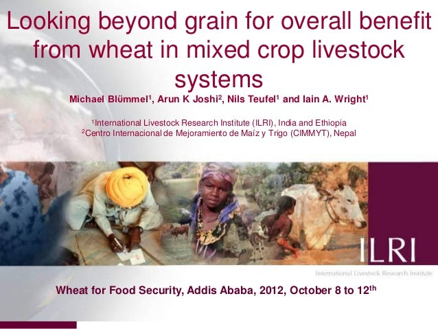 Looking beyond grain for overall benefit  from wheat in mixed crop livestock               systems      Michael Blϋmmel1, ...