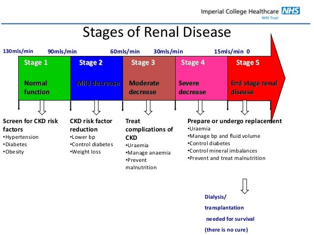 Renal nutrition