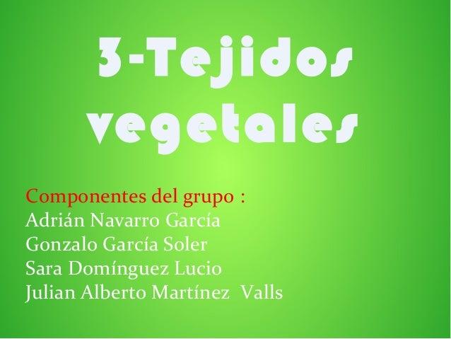 3-Tejidos       vegetalesComponentes del grupo :Adrián Navarro GarcíaGonzalo García SolerSara Domínguez LucioJulian Albert...