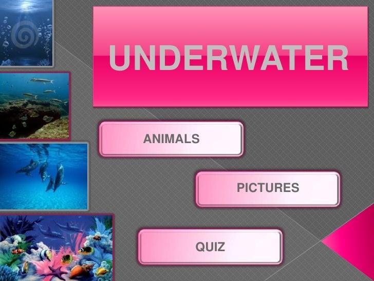UNDERWATER   ANIMALS                 PICTURES           QUIZ