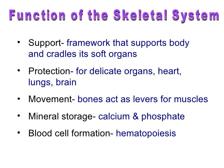 Short answer essay name three functions of the skeletal system
