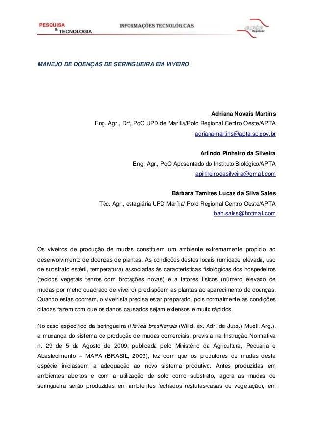 MANEJO DE DOENÇAS DE SERINGUEIRA EM VIVEIRO Adriana Novais Martins Eng. Agr., Dra , PqC UPD de Marília/Polo Regional Centr...