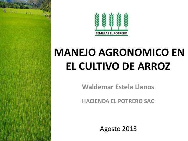 MANEJO AGRONOMICO EN EL CULTIVO DE ARROZ Waldemar Estela Llanos HACIENDA EL POTRERO SAC Agosto 2013