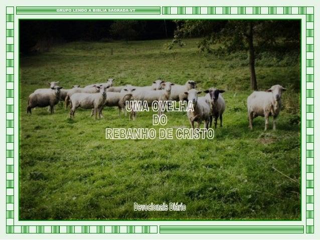 019 2013 - devocional diário - bsvt - uma ovelha do rebanho de cristo
