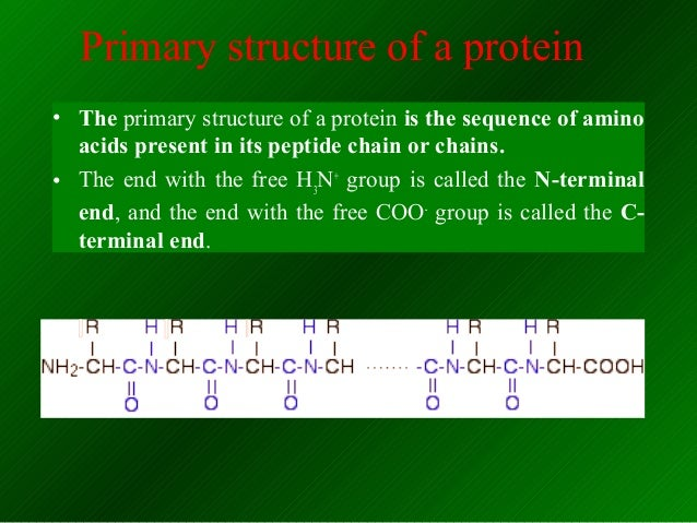 the structure and function of proteins biology essay They also play a central role in biological processes  dna-associated proteins  regulate chromosome structure during cell division and/or.