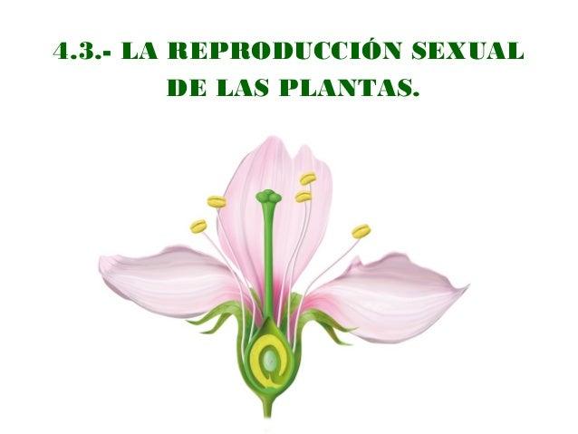 4.3.- LA REPRODUCCIÓN SEXUAL DE LAS PLANTAS.