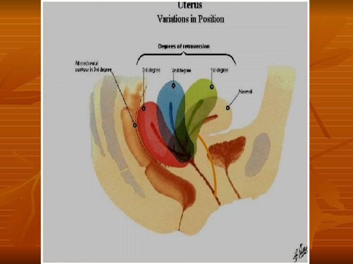 Anatoma Del Aparato Genital Femenino
