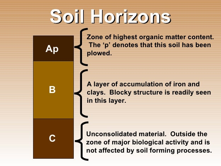 Introduction to soil science for Soil zone of accumulation