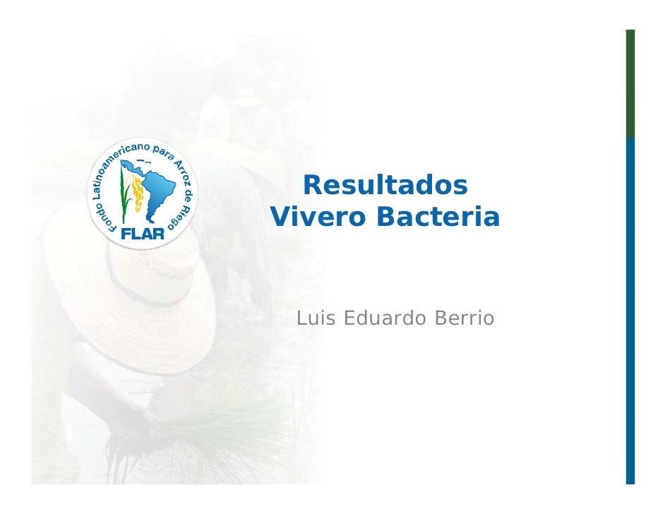 023   resultados vivero bacteria 2011 -  l berrio