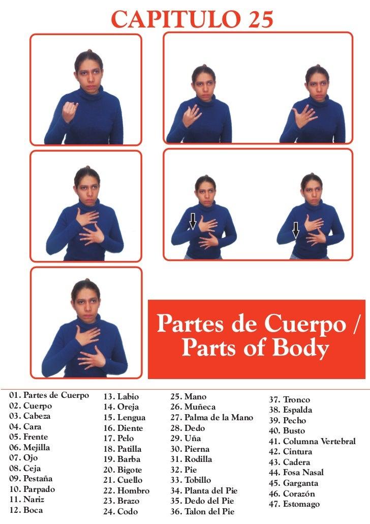 CAPITULO 25                                     Partes de Cuerpo /                                       Parts of Body01. ...