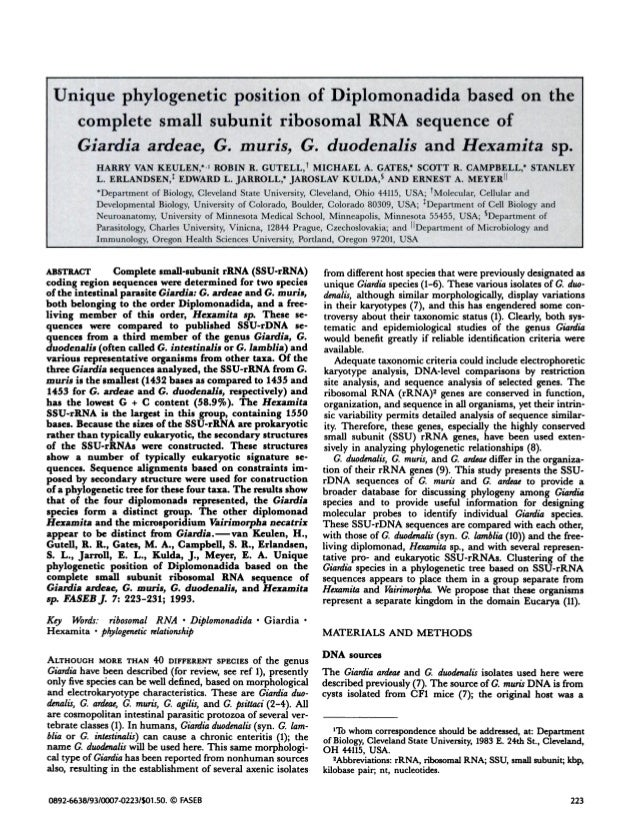 Unique phylogenetic position of Diplomonadida based on thecomplete small subunit ribosomal RNA sequence ofGiardia ardeac, ...