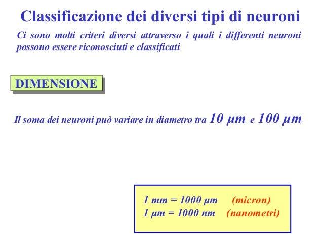02 classificazione dei neuroni