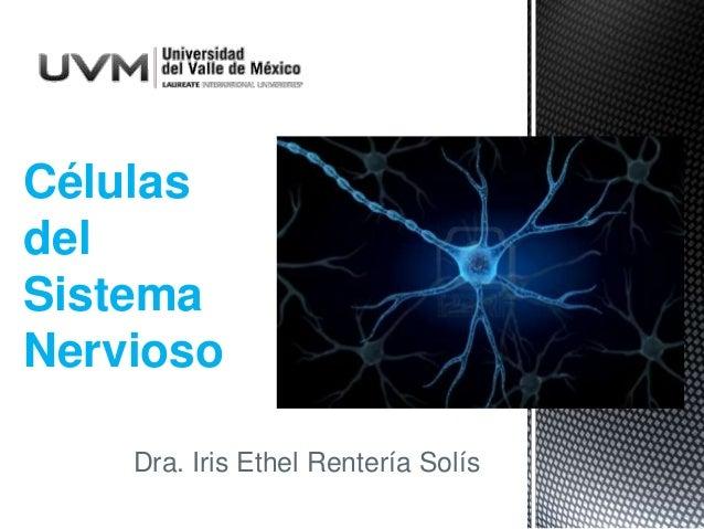 Dra. Iris Ethel Rentería Solís Células del Sistema Nervioso