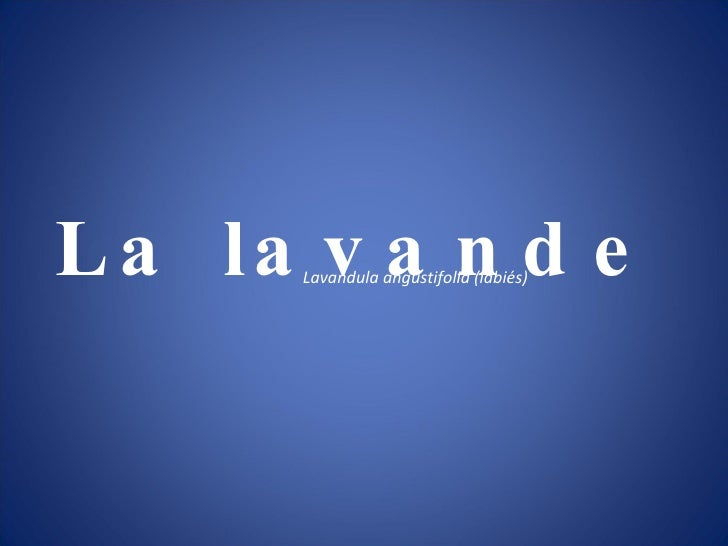 La lavande Lavandula angustifolia (labiés)