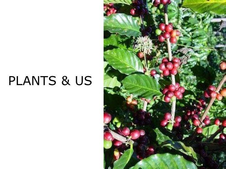 PLANTS & US