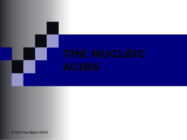 THE NUCLEIC ACIDS  © 2007 Paul Billiet ODWS