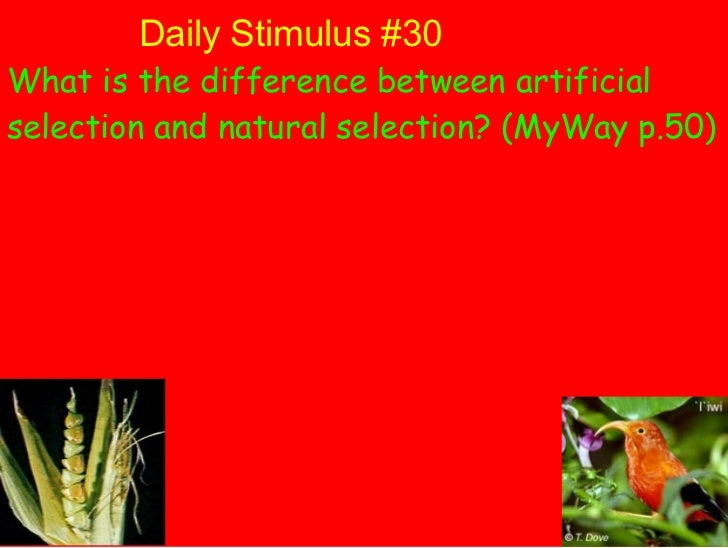 Daily Stimulus #30 What is the difference between artificial selection and natural selection? (MyWay p.50)