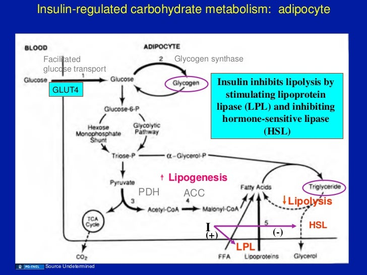 enzymology catalytic mechanism carbohydrate metabolism adenosine Biochemistry: enzymology and catalytic mechanisn, carbohydrate metabolism, adenosine triphospate (atp) research paper.