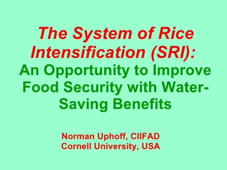 0328 The System of Rice Intensification (SRI):  An Opportunity to Improve Food Security with Water-Saving Benefits