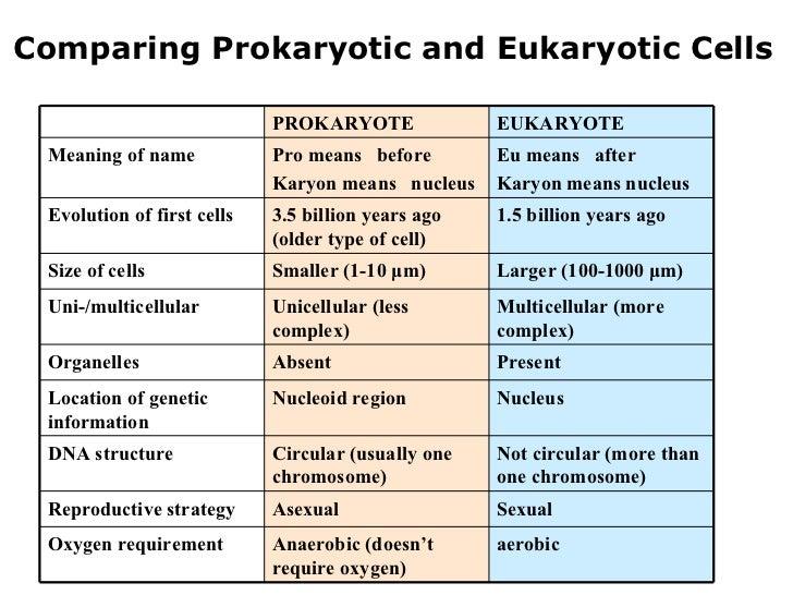 03 6 kingdoms prokaryote eukaryote. Black Bedroom Furniture Sets. Home Design Ideas