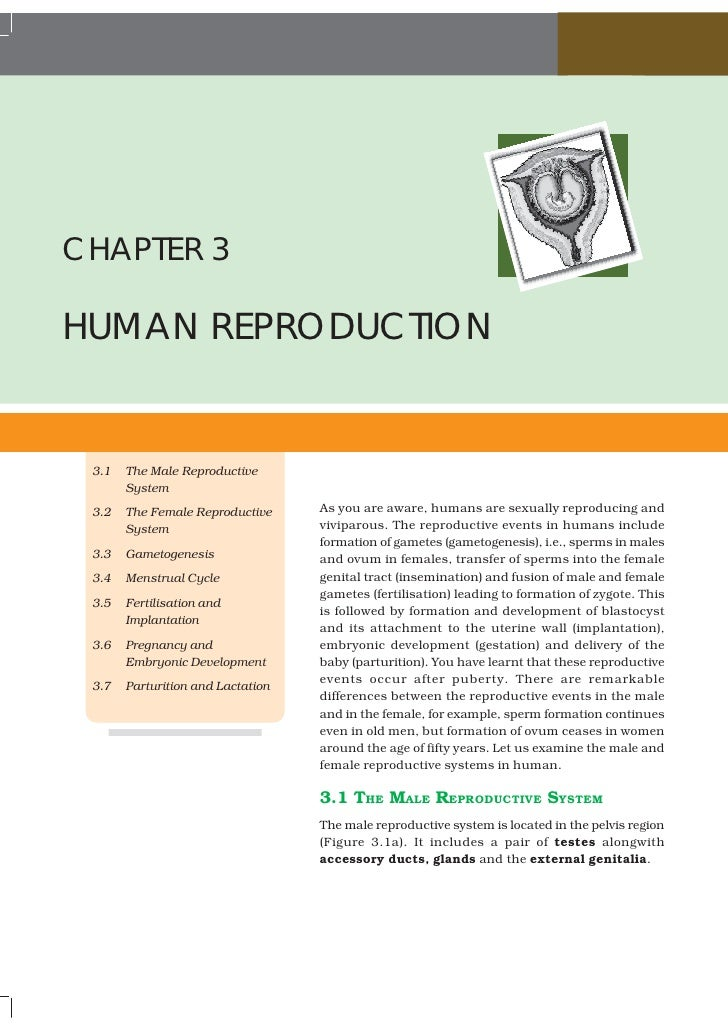 CHAPTER 3HUMAN REPRODUCTION 3.1   The Male Reproductive       System 3.2   The Female Reproductive     As you are aware, h...