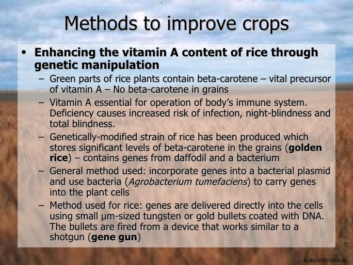 Methods to improve crops• Enhancing the vitamin A content of rice through  genetic manipulation  – Green parts of rice pla...