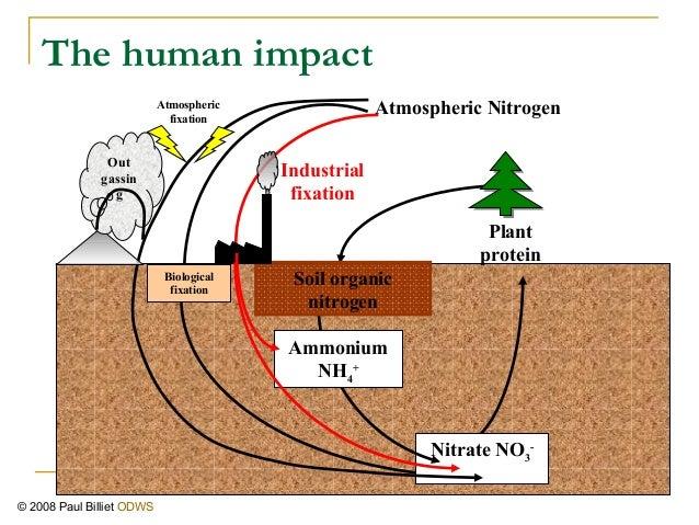 Nitrogen Cycle Human Impact Nitrogen The Human Impact