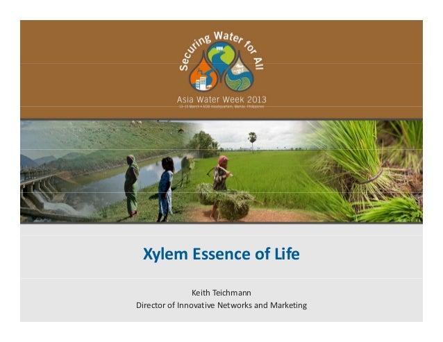 Xylem Essence of Life