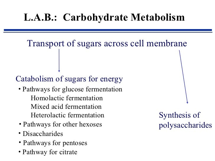 lab 1 carbohydrates Carbohydrate metabolism denotes the various biochemical processes responsible for the formation, breakdown and interconversion of carbohydrates in living organisms the most important.