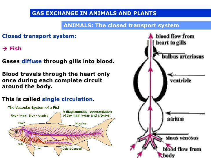 respiration in plants and animals