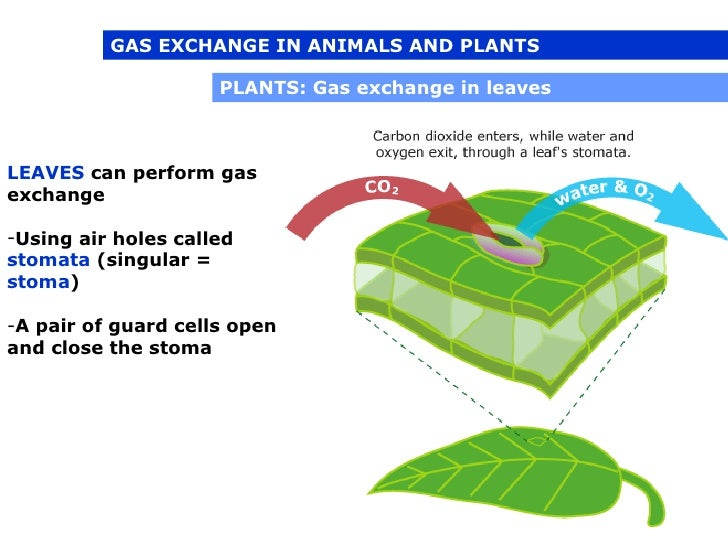 respiration in plants and animals Learn about excretion, the removal of substances from plants, animals and other living organisms with bbc bitesize gcse biology.