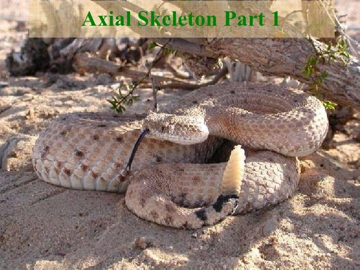 Axial Skeleton Part 1