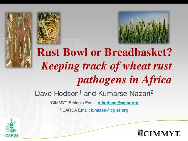 Rust Bowl or Breadbasket? Keeping track of wheat rust        pathogens in AfricaDave Hodson1 and Kumarse Nazari2   1CIMMYT...