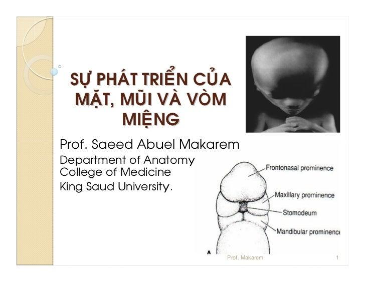 Prof. Makarem   1