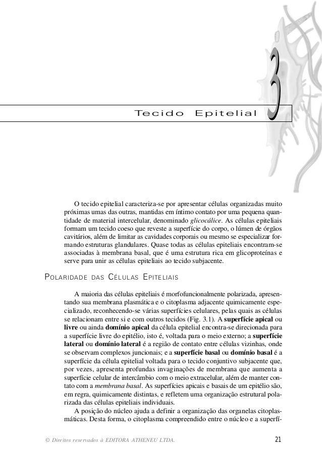 Te c i d o             Epitelial                  3          O tecido epitelial caracteriza-se por apresentar células orga...