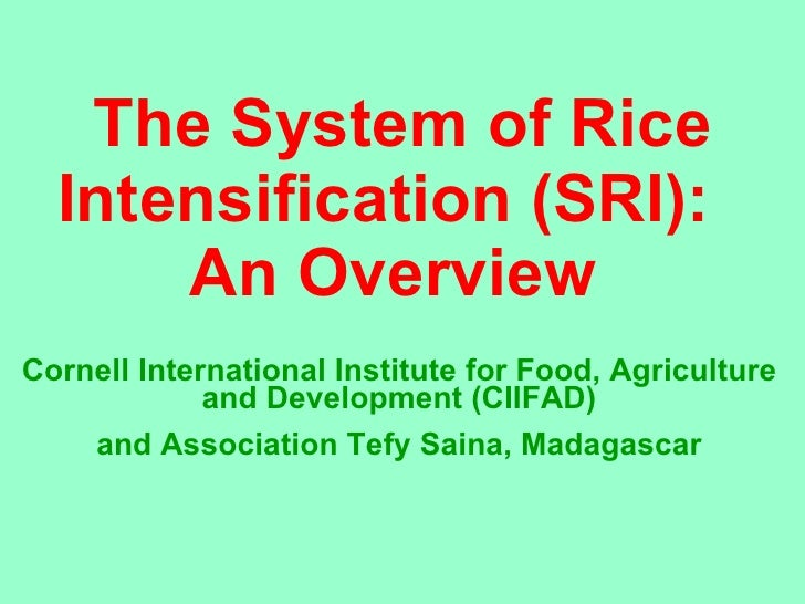 The System of Rice Intensification (SRI):  An Overview  Cornell International Institute for Food, Agriculture and Developm...