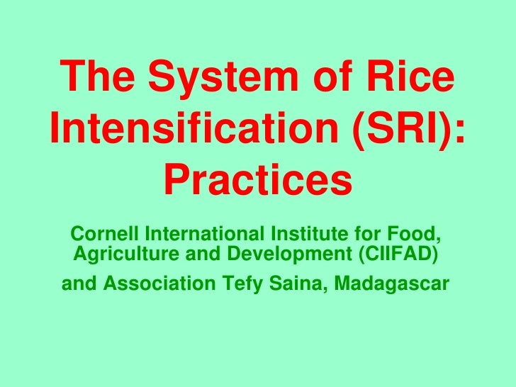 The System of Rice Intensification (SRI):       Practices  Cornell International Institute for Food,  Agriculture and Deve...