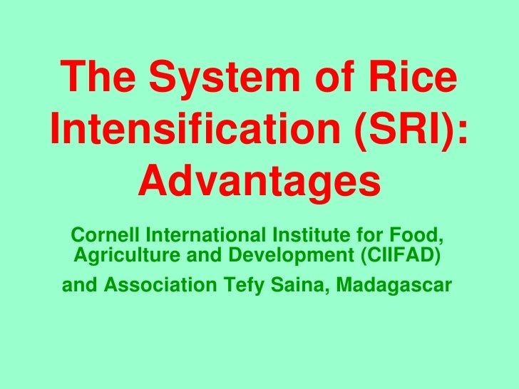 The System of Rice Intensification (SRI):     Advantages  Cornell International Institute for Food,  Agriculture and Devel...
