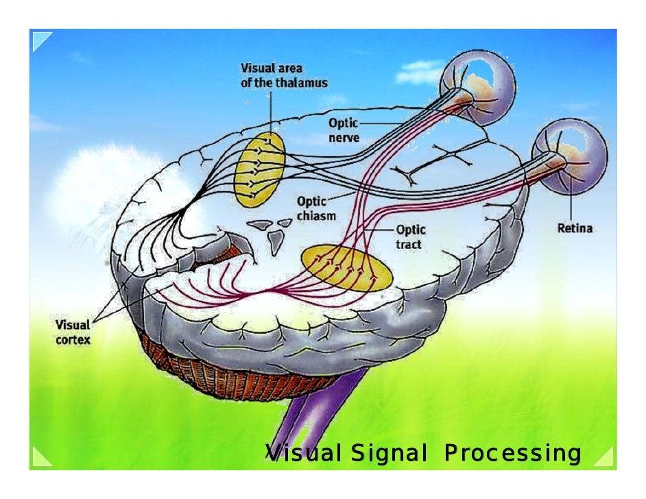 Visual Signal Processing