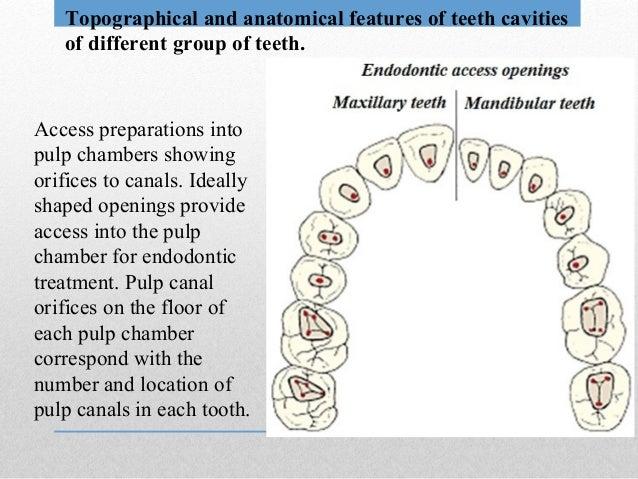 Endodontics Anatomy Of Root Canals Instruments