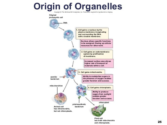 04 Lecture Ppt Cell Structure And Function