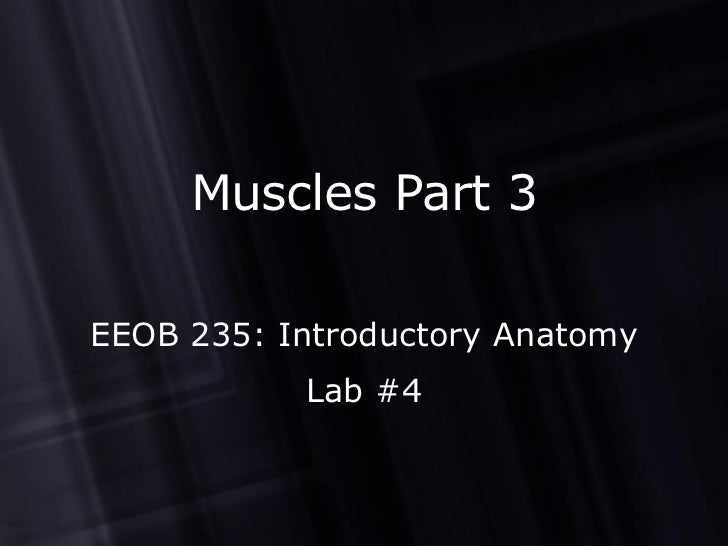 Muscles Part 3 EEOB 235: Introductory Anatomy Lab #4